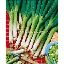 лук за зелено Bianco`SG