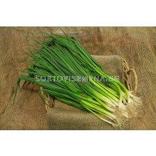 лук за зелено Кошигая