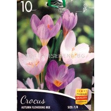 Минзухари Autumn flowering mix - Crocuses Autumn flowering mix