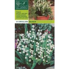 Момина сълза (Convallaria majalis) 10бр