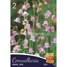 Момина сълза (Convallaria majalis) Розова