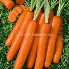 моркови Корал F1