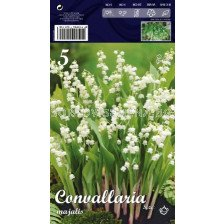 Момина сълза Бяла - Convallaria majalis white