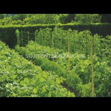 Мрежа за краставици