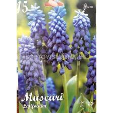 Мускари Latifolium - Muscari Latifolium