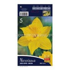 Нарцис (Narcissus) Carlton (1оп - 5 луковици)