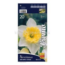 Нарцис (Narcissus) Large-Cupped Ice-Follies (20 бр.)