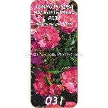 Нискостъблена роза 031