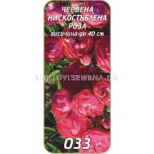 Нискостъблена роза 033