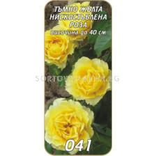 Нискостъблена роза 041
