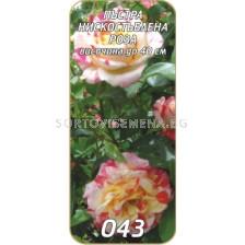 Нискостъблена роза 043