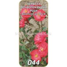 Нискостъблена роза 044