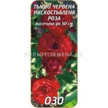 Нискостъблена роза 030