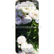 Нискостъблена роза 034