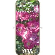 Нискостъблена роза 038