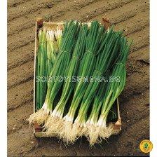 Семена за лук за зелено Парад (Parade) BJ
