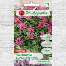 Семена Мушкато каскадно (сакъз)  Фукция F1 лилаво-розова /Pelargonium peltatum Fuchsia F1 pink-purple /LG 1 оп