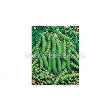 Семена грах Преладо F1 Syngenta 1 оп -100 000 сем