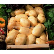 семе картофи Атлас