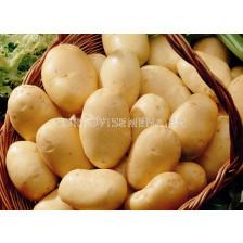 Семе картофи Фрисландер