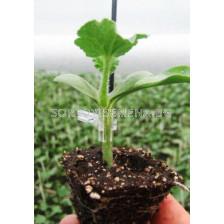 семена за подложка Витали