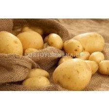 семе картофи Актрис 5кг