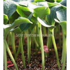 семена за подложка Емфъсайз