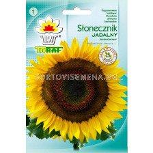 Декоративен слънчоглед - Toraf