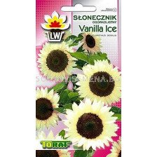 декоративен слънчоглед - Vanilla Ice