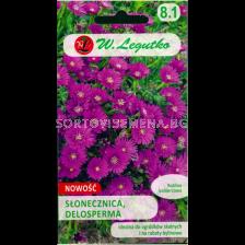 Делосперма /Delosperma ecklonis purple-pink / LG 1 оп