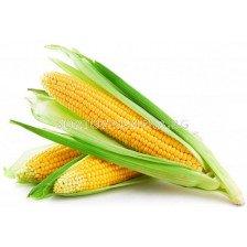 Супер сладка царевица GSS 1477 F1