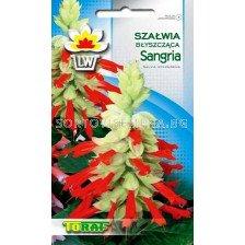Салвия - Sangria