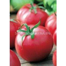 Семена домати Сайка F1 - tomato Saika F1