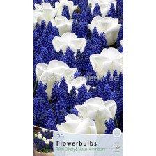 Цветен микс в Бяло и Синьо
