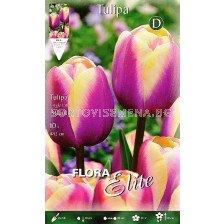 Лале (Tulip) Atlantis