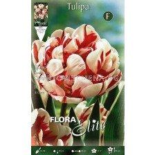 Лале (Tulip) Carnaval de Nice
