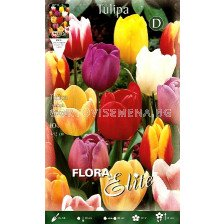 Tulipa Triumph Mixed