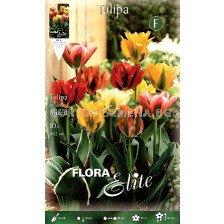 Tulipa Viridiflora Mixed