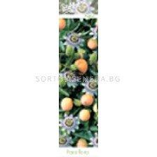 Ядлива пасифлора (Passiflora edulis)