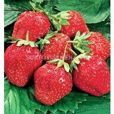 ягоди Cherry Berry - strawberry Cherry Berry