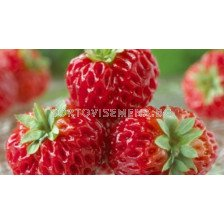 ягоди (Strawberry) Framberry