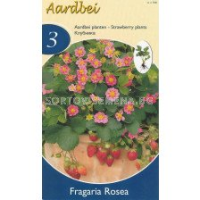ягоди Rosea - strawberry Rosea