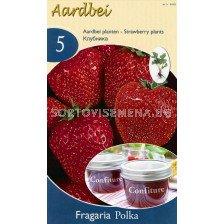ягоди (Strawberry) Polka