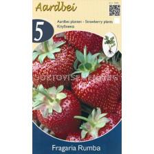 ягоди (Strawberry) Rumba