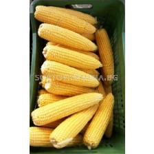Захарна царевица Оверланд (Overland F1)