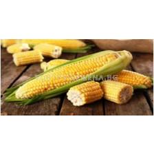 Захарна царевица Синдон (Sindon F1)