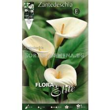 Кала (Calla) Zantedeschia Aethiopica