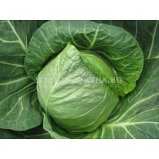 Зеле Грийн Престо F1 - cabbage Green Presto F1