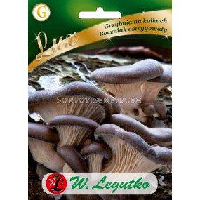 Гъби Перлена стрида / Pleurotus ostreatus /LG 1 оп