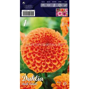 Далия Ball Silvia - Dahlia Ball Silvia